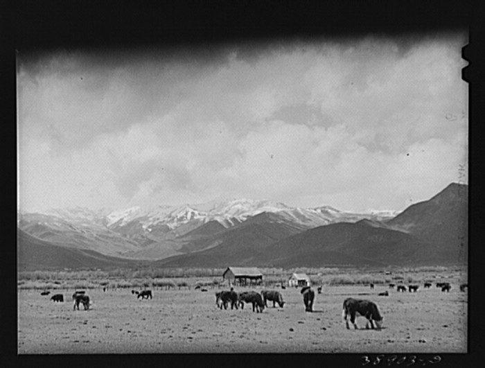 Farmland in Heber Valley 1941